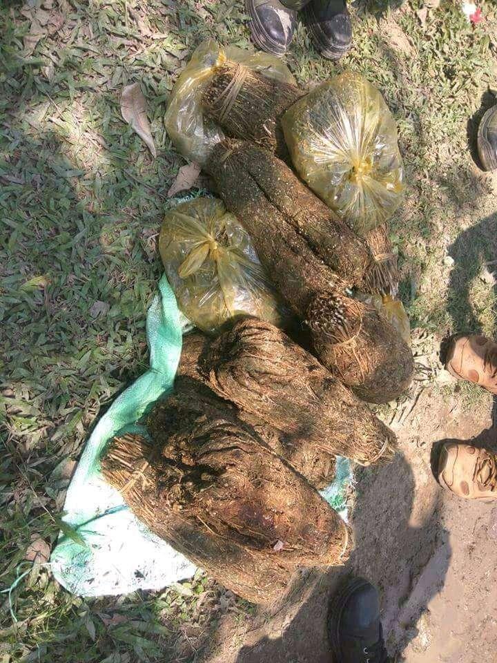 Large quantity of Marijuana seized in Sonari;one apprehended