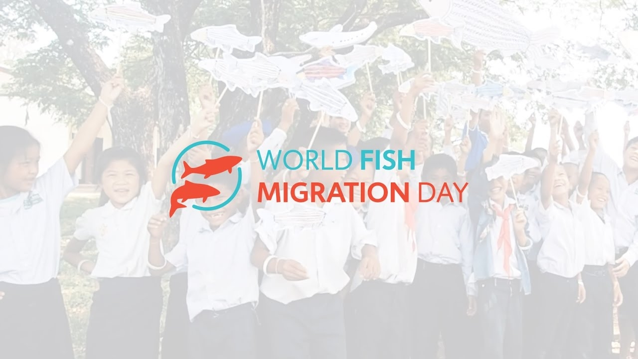 World Fish Migration Day: Effort to conserve fish population