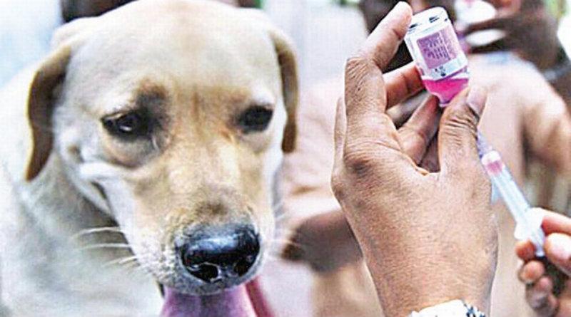 Stray dog vaccination drive in Guwahati