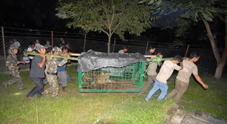 Rescued tigers add grace to Biological Park in Itanagar