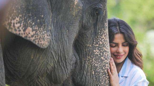 Duplicate Priyanka Chopra In Kaziranga for long shots