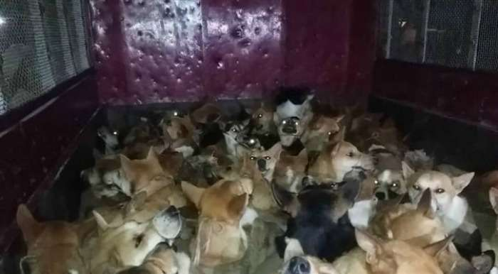 Truck Carrying Stray Dogs Held near Nagaon