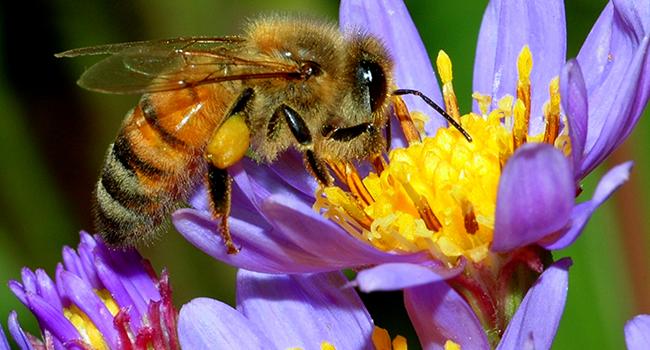 World Honey Bee Day celebrated