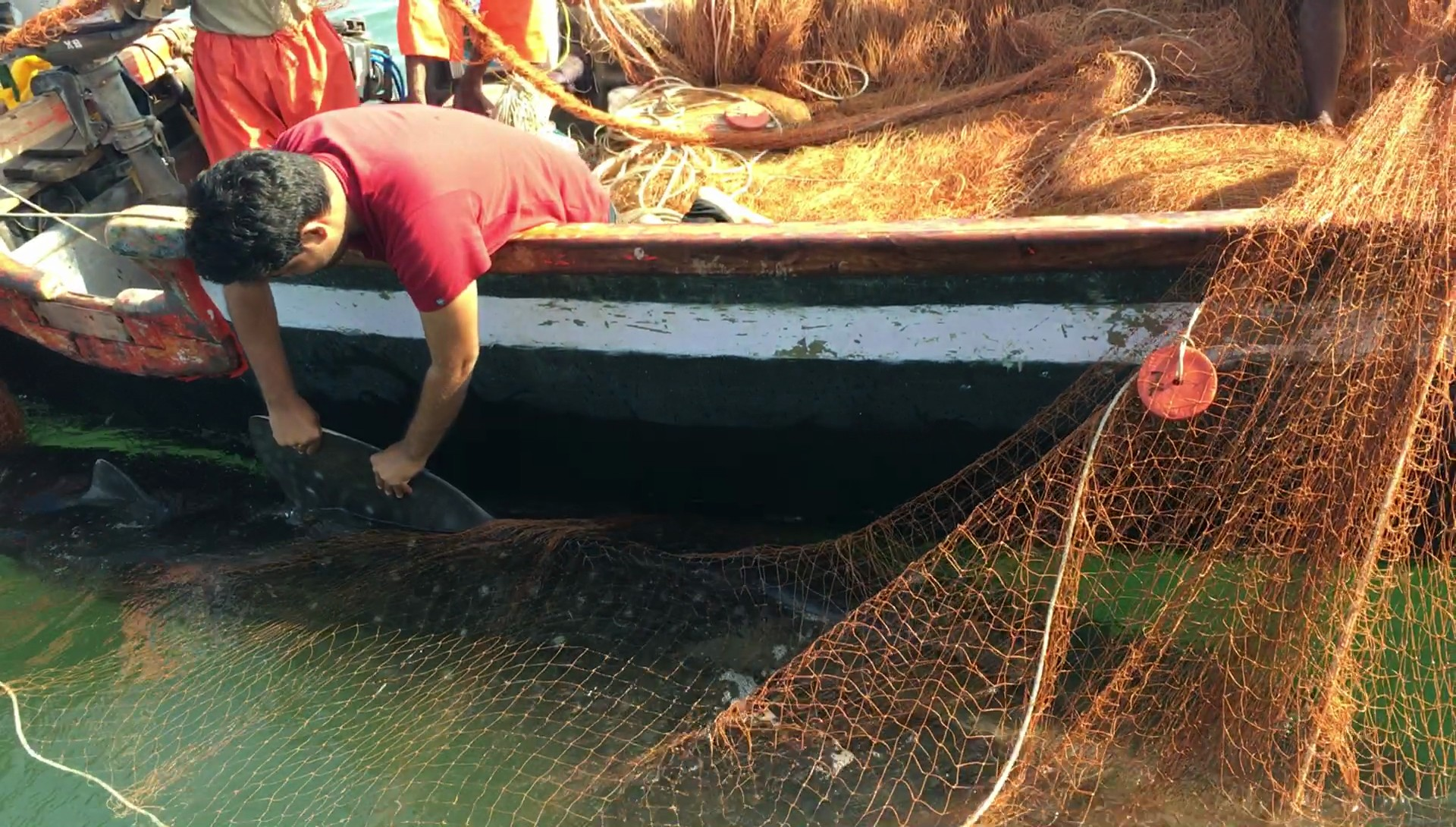Miscreants  cut nets with fingerlings worth lakhs