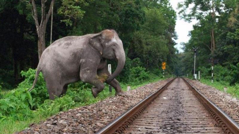 Killing of pachyderms by trains moves HC