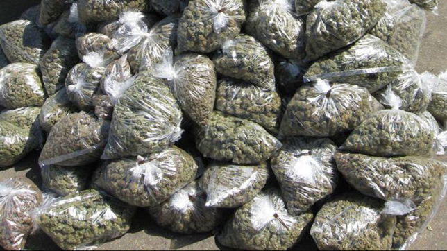 3,350 kgs of Ganja seized in Tripura by Security Forces