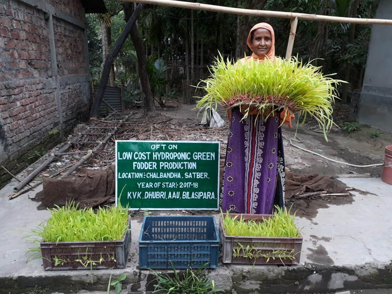 Hydroponic Green Fodder - a unique and path-breaking initiative by KVK