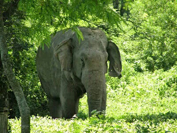 Man-elephant conflict on rise in Udalguri