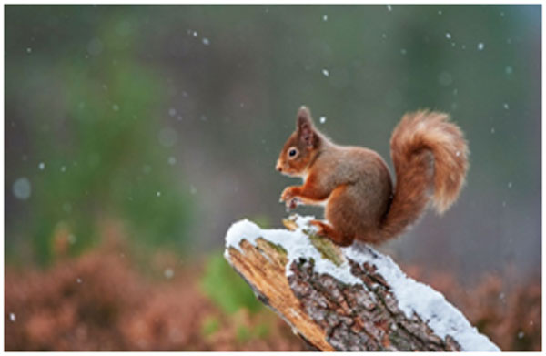Tips for Wildlife Photography -I
