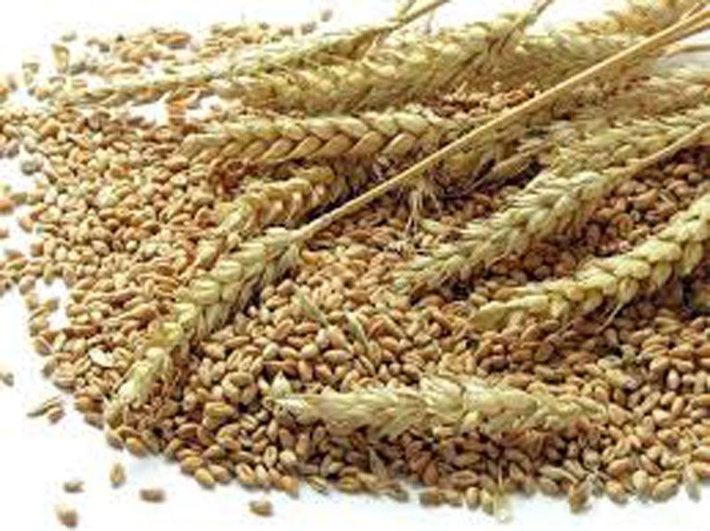 Wheat procurement exceeds target
