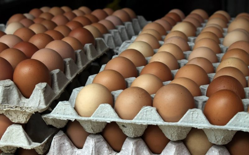 Kerala to probe reports of artificial Chinese eggs