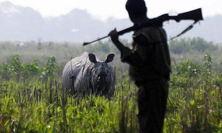 Poacher killed
