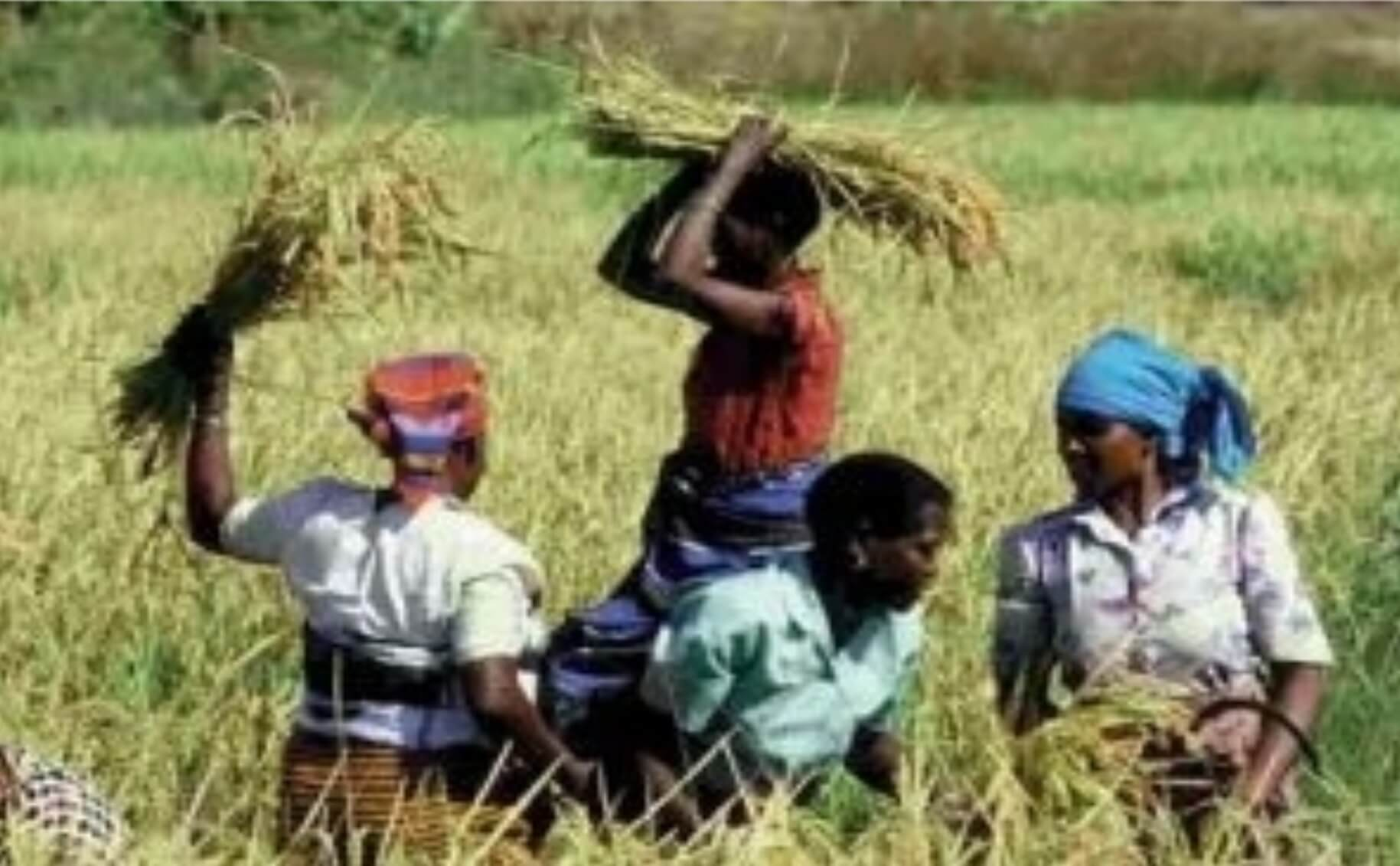 Pepping Up the  Integrated Rural Development Process