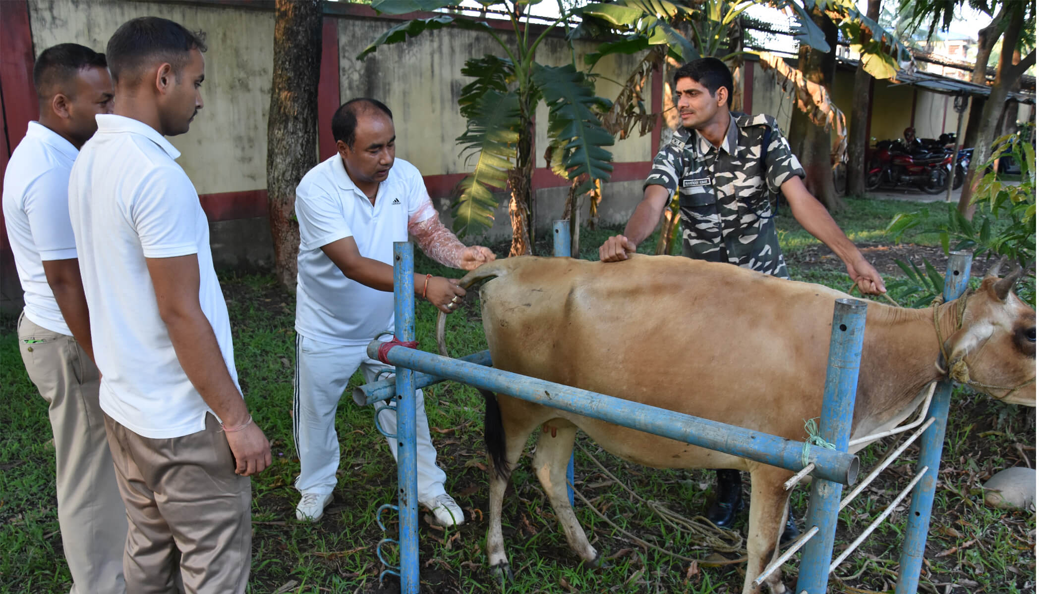 SSB conducts training on artificial insemination