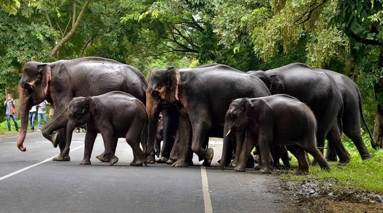 Ways to mitigate man-elephant conflict discussed