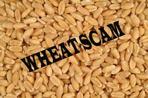 Trader held in PDS wheat scam