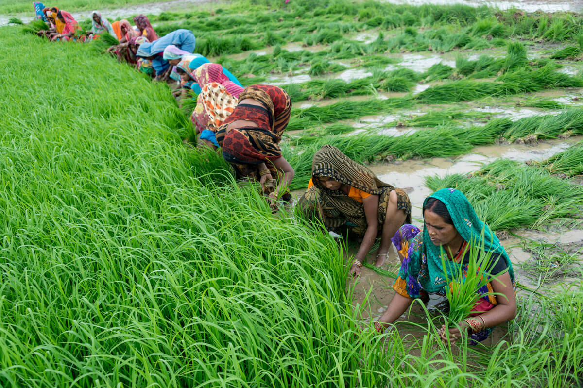 Competitiveness  in Agriculture will Boost Other Sectors