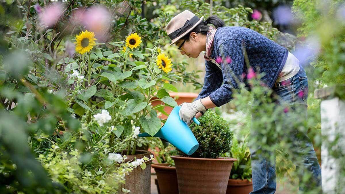 Expert Gardening Tips &  Advice for the Novice Gardeners