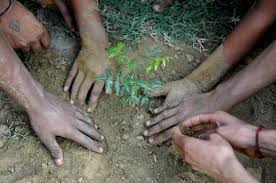 BVFCL conducts plantation drive