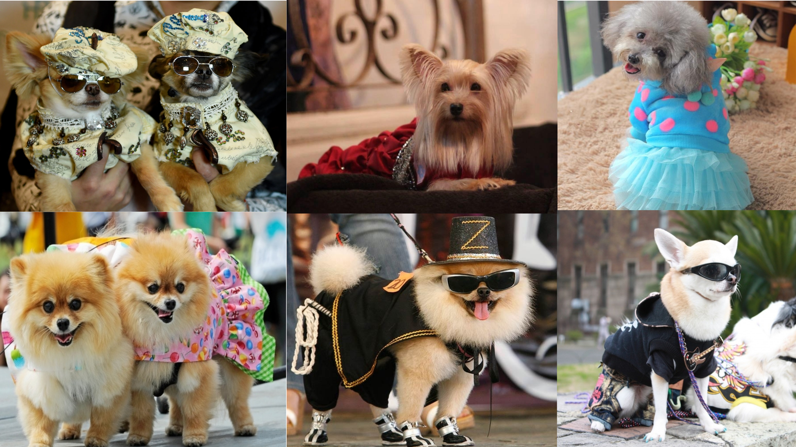 Pet Fashion – It's a Pet's World Indeed!