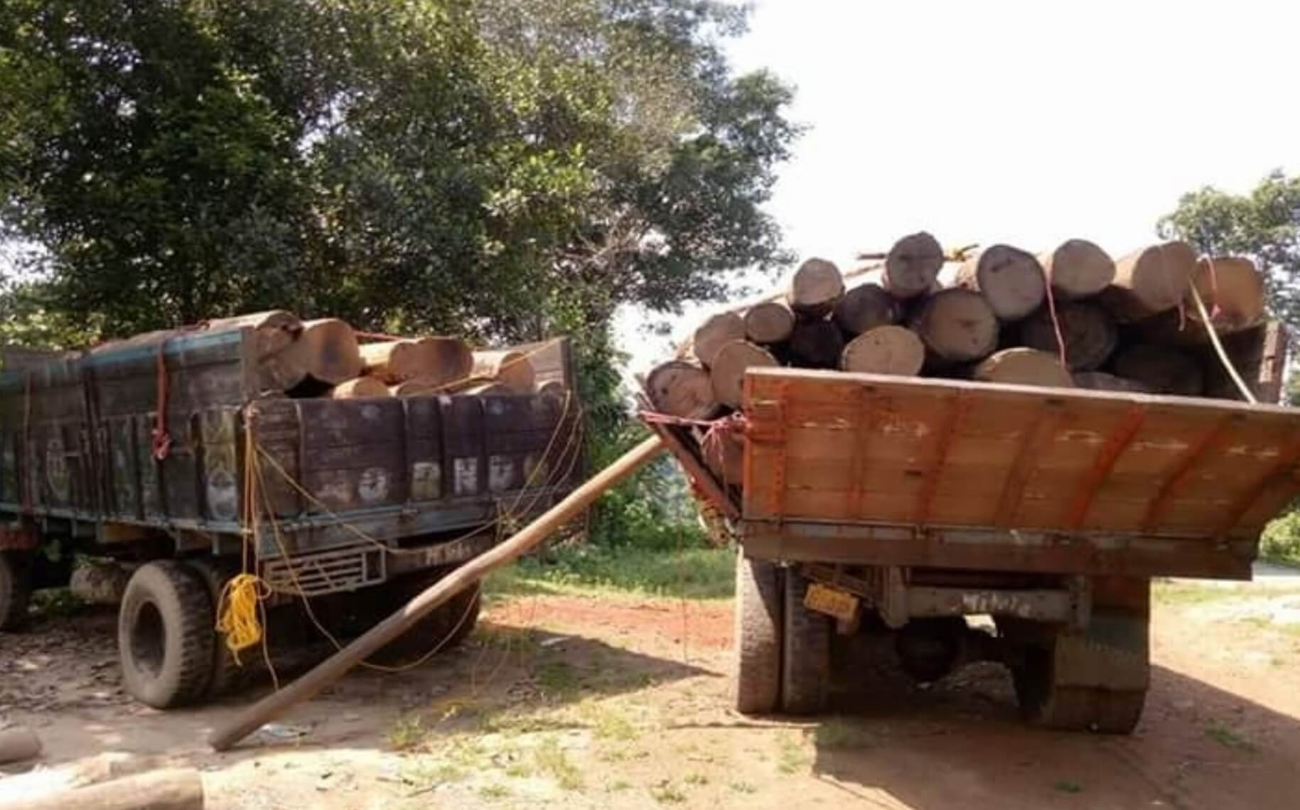 Trucks with timber worth Rs 1.64 lakh seized