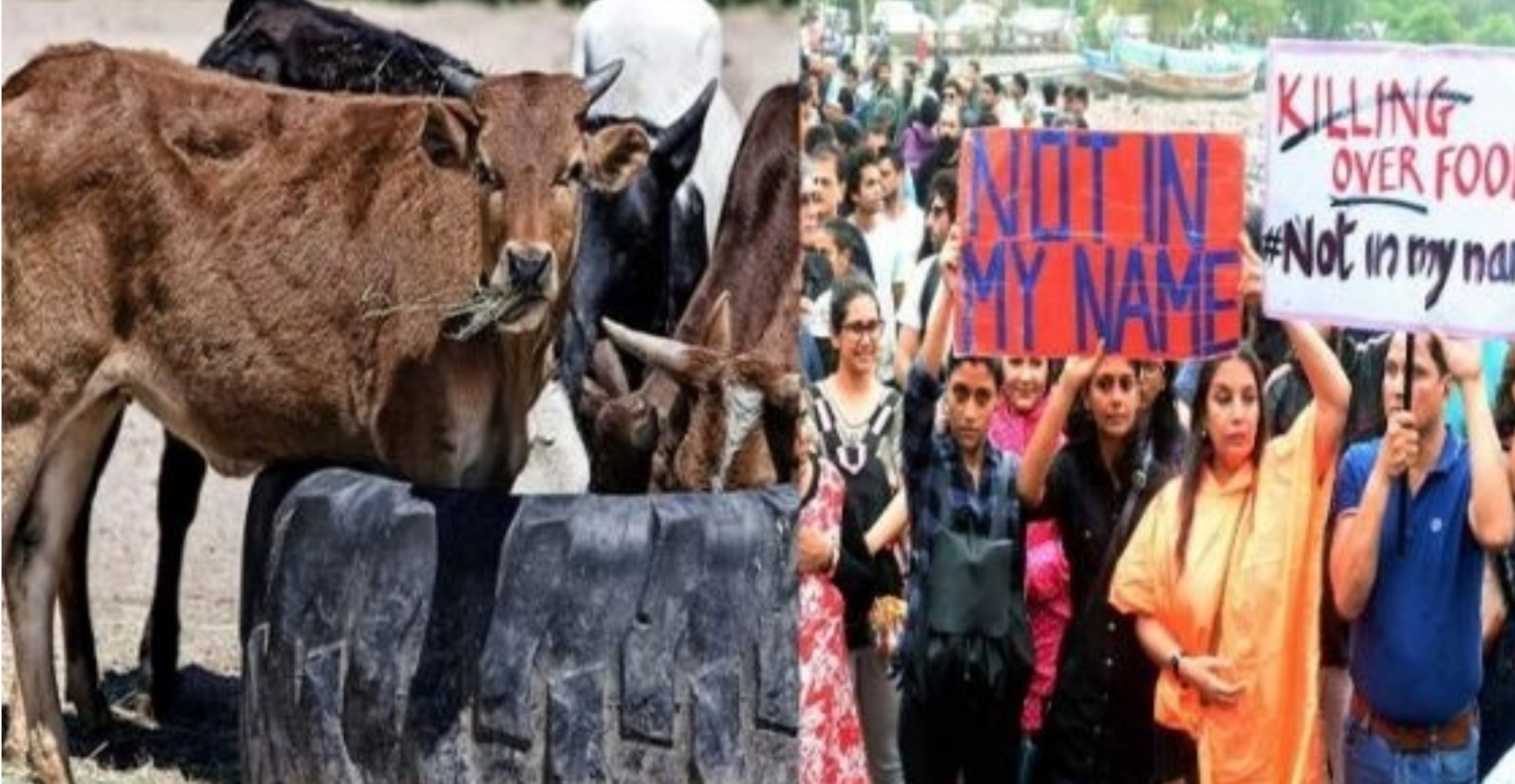 Cow Vigilantism is Unacceptable and Not to be Linked with Religion: SC