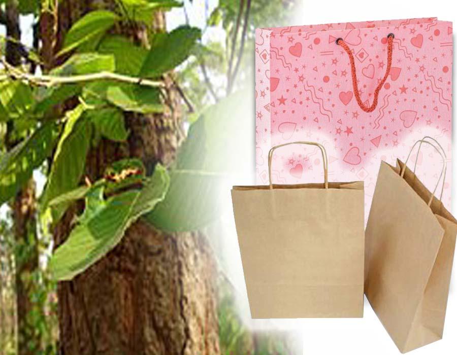 Paper bag, shaal leaves replacing plastic bags in Agartala