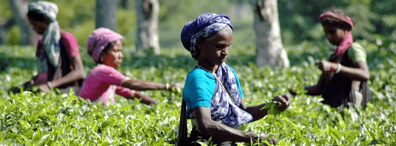 Daily wage of tea labourers hiked