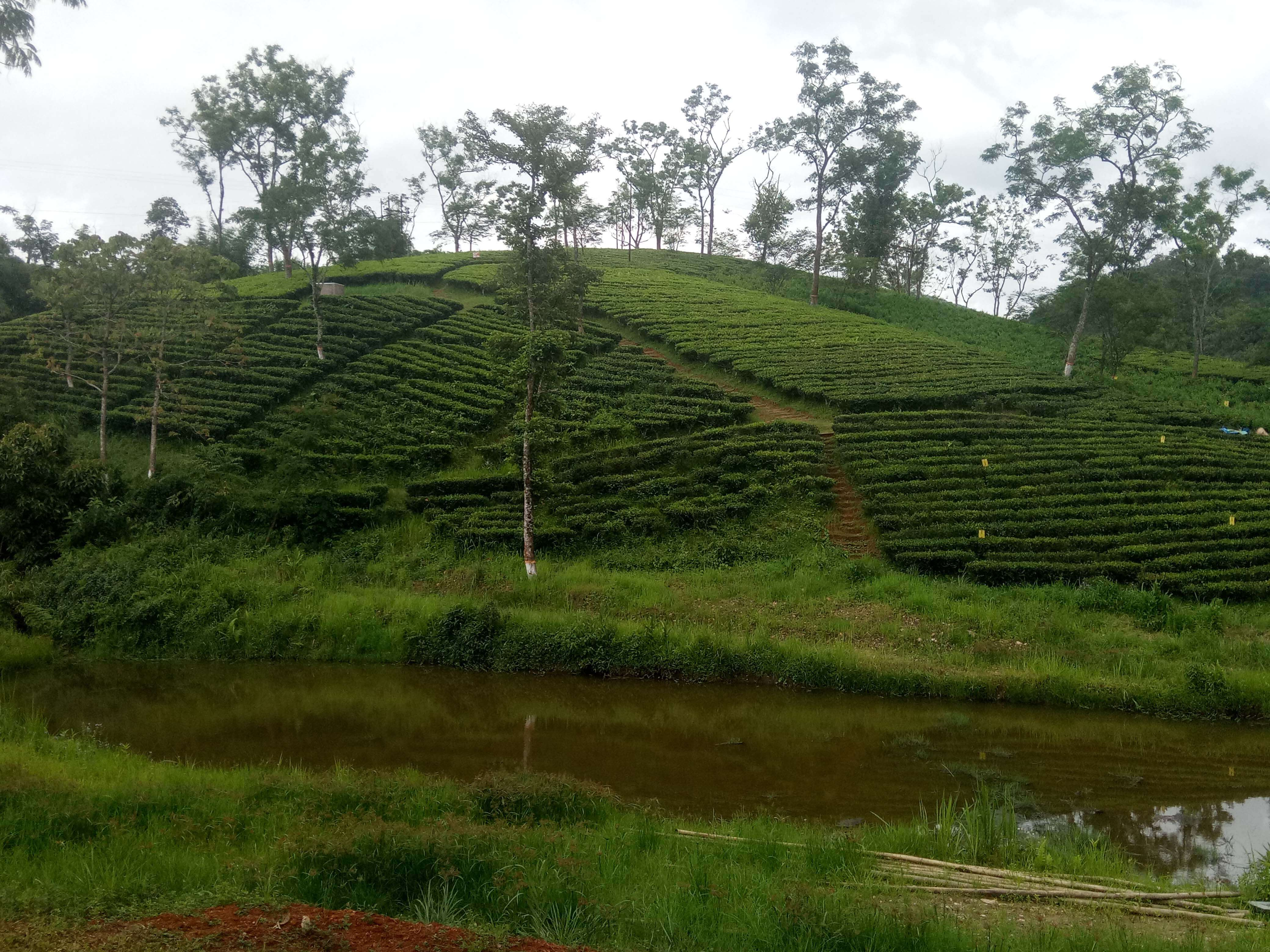 'Tea centre producing quality organic tea'