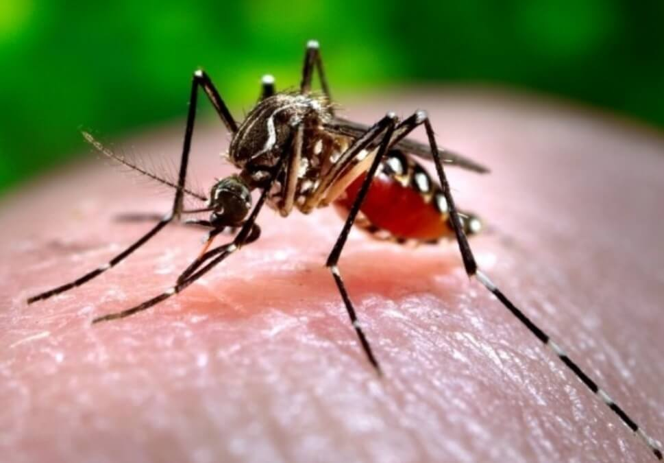 Dengue grips Himachal town