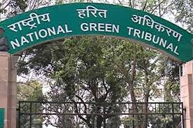 Don't cut trees till July 19, says NGT