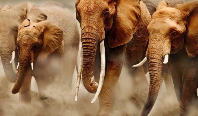 Hundreds of wildlife species in Peru face extinction risk