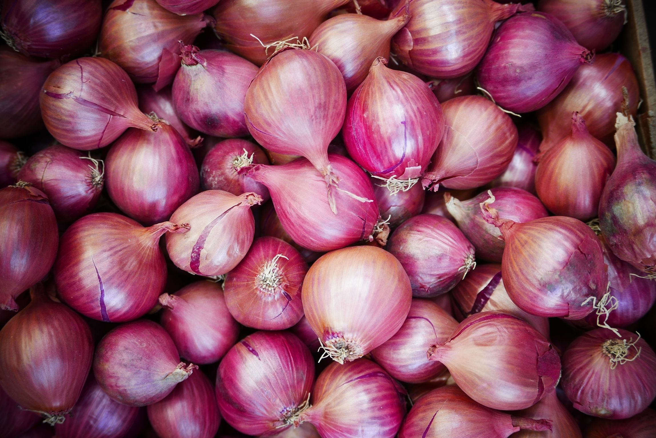 Dispur to procure onion  in advance to check prices