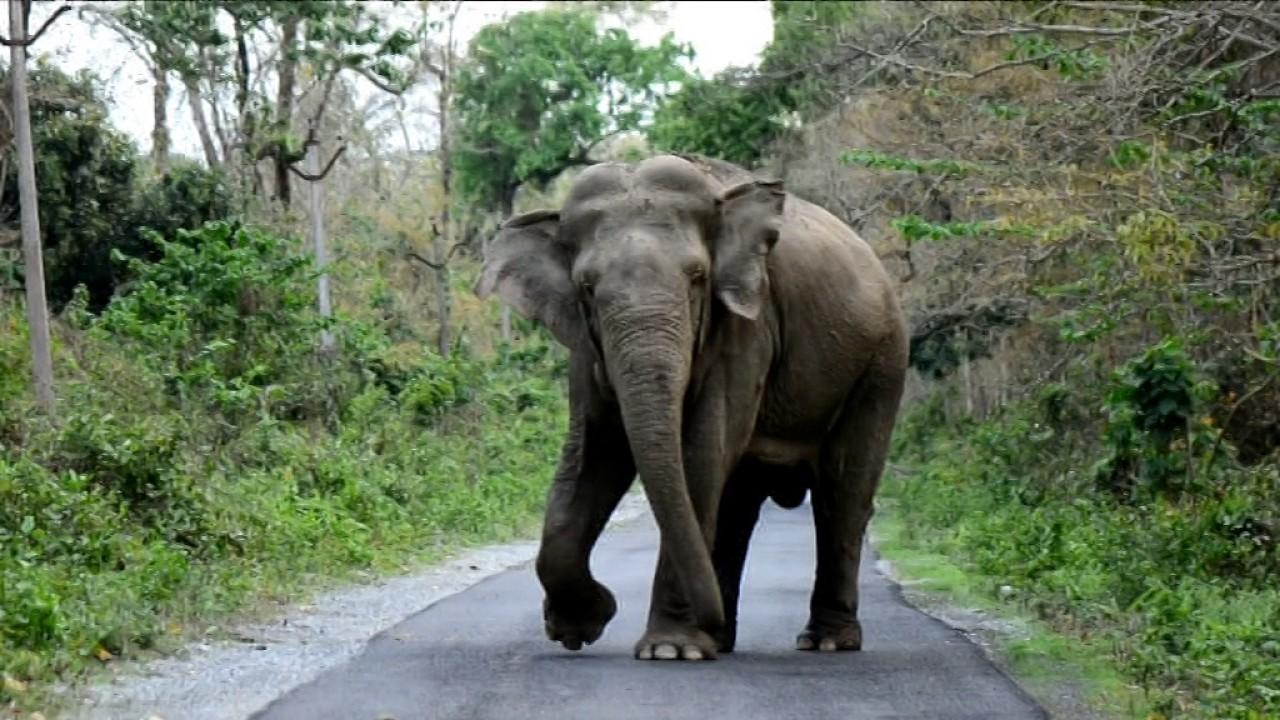 Elephants cause havoc at Rani near Guwahati
