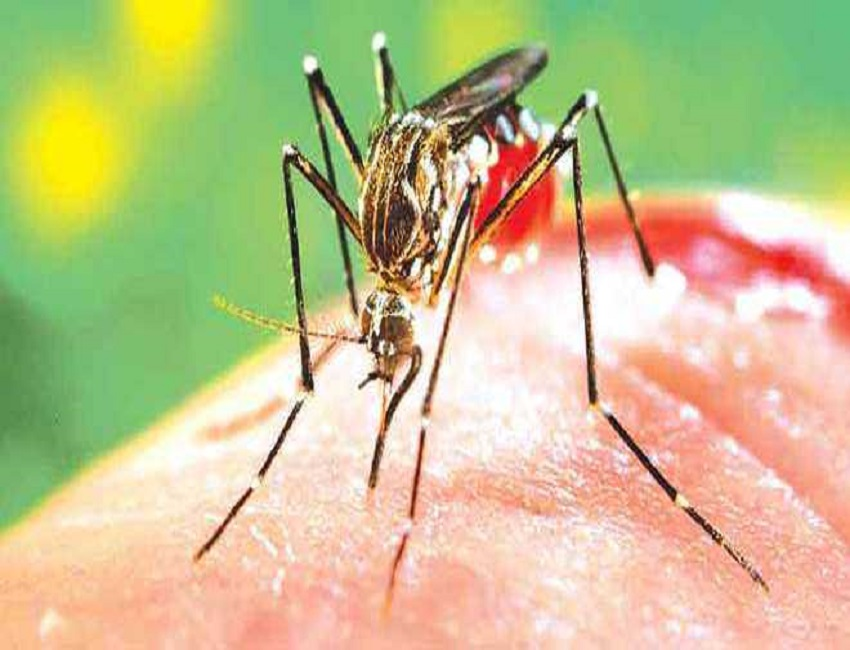 47 Dengue cases detected in Nagaland