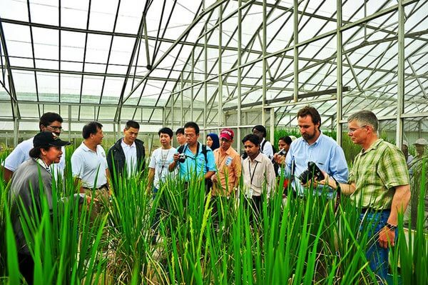 Thrust Laid on Fulfilling Prime Minister's Dream of Doubling Farmers' Income: International Rice Research Institute Expert