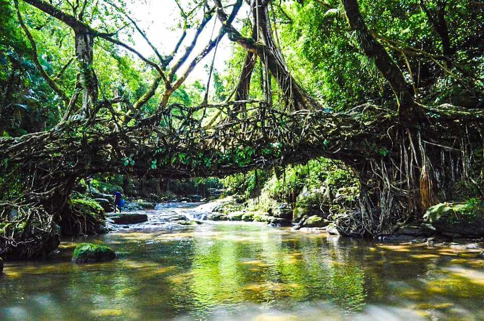 Mawlynnong- The Cleanest Village with the Astounding Living Root Bridge