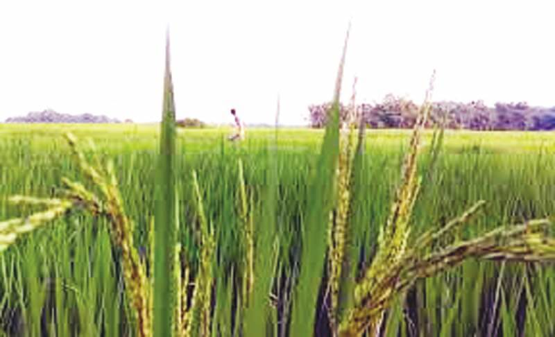 With only 1% of Insured Crop coverage, Assam lags way being National Average