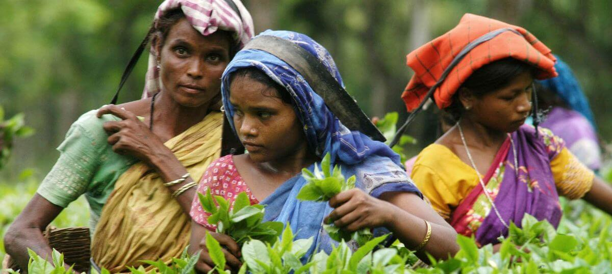 Committee formed to implement welfare schemes for tea tribes in Tinsukia