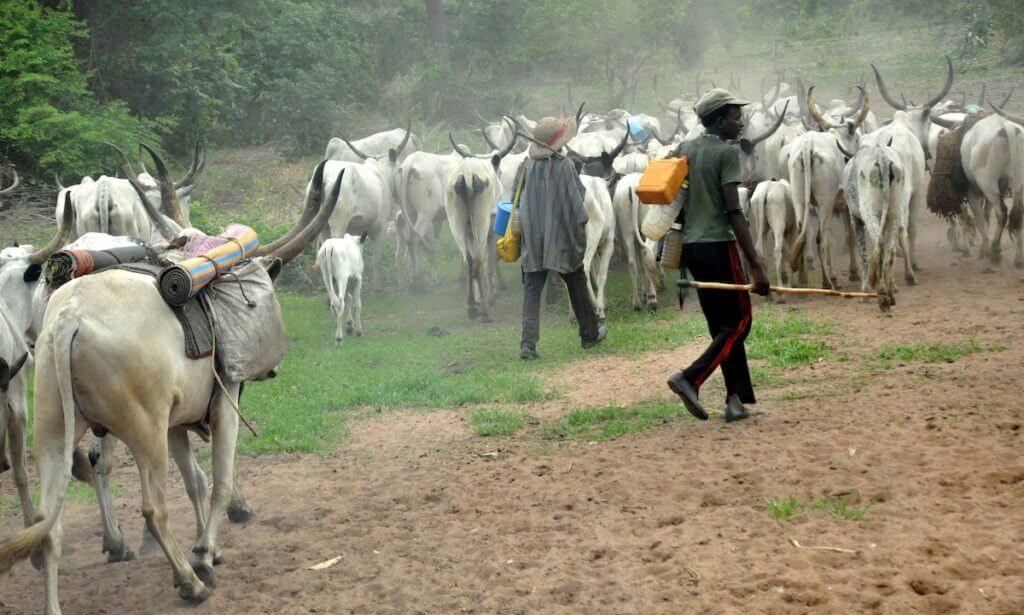 Cattle thieves held in Sivasagar