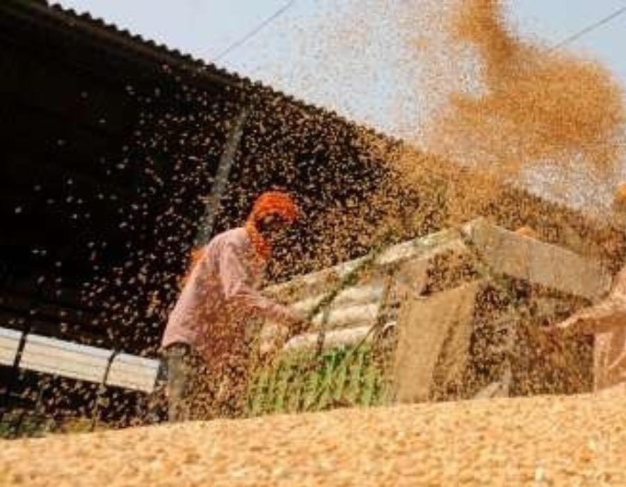 India's YoY exports up 14%, imports rise 29%