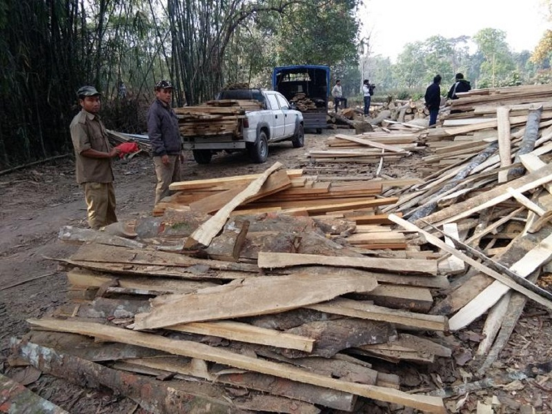 Assam Government tightens the noose on illegally running sawmills in State