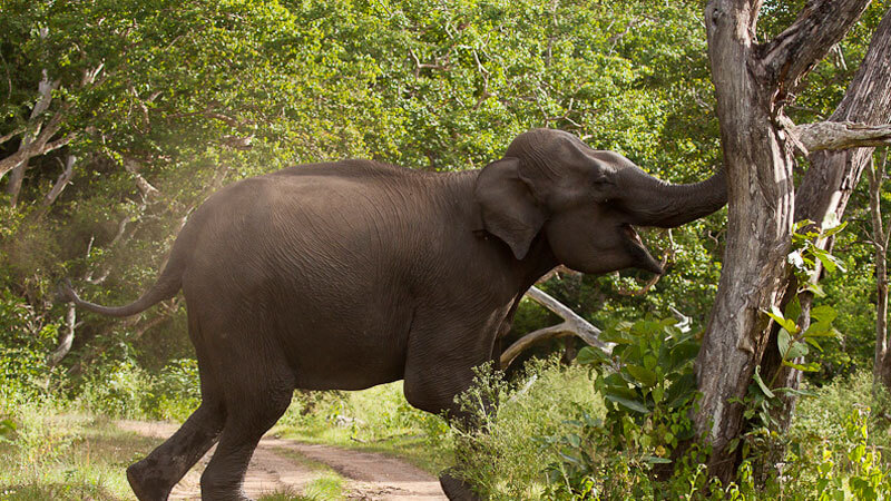 Image result for elephant attack