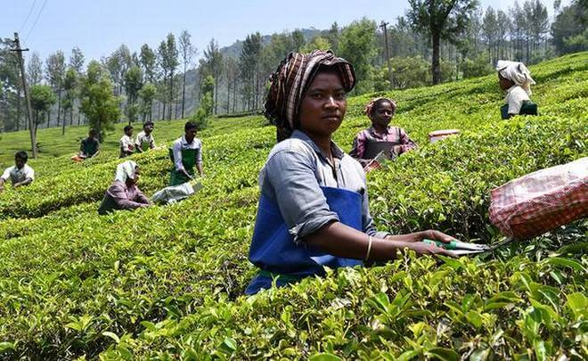 Tea garden labourers to go on strike in support of the 10 Trade Union protest