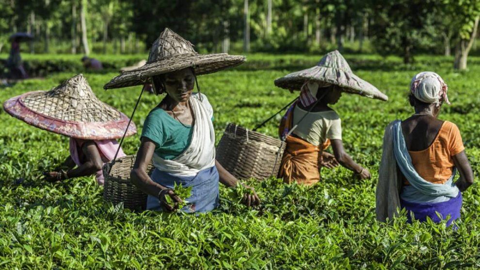 Assam Tea Tribes