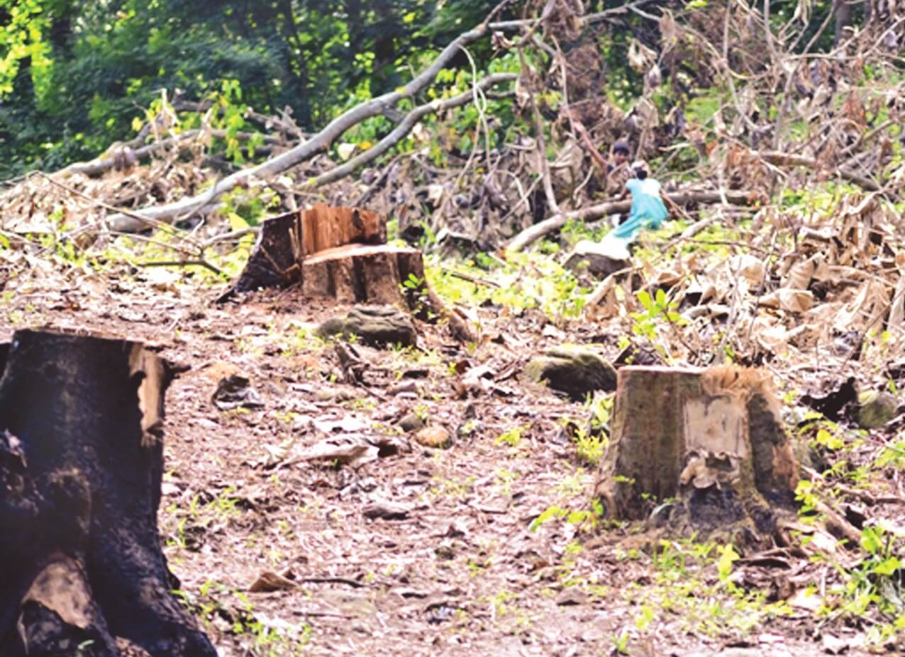 GMCH authority destroying  forests of Narakasur hills: Early Birds