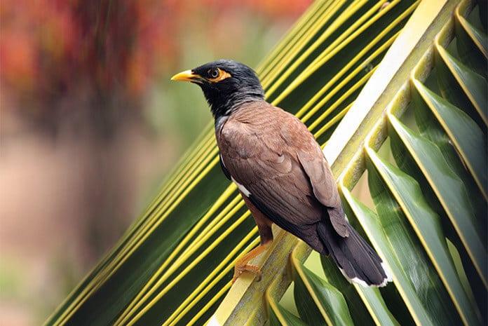 Manipur Police Arrests Man for Poisoning Birds