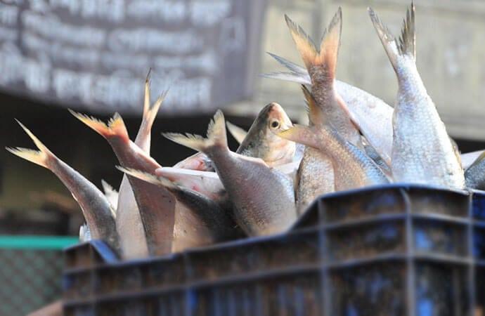 Fish Supply to Tripura Resumes