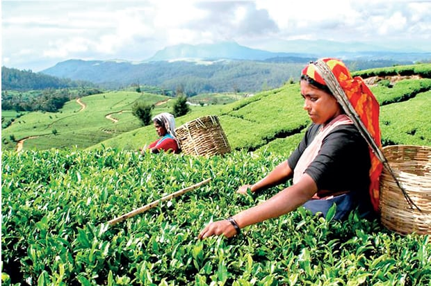 Interim Relief to Tea Management from March 1, 2018
