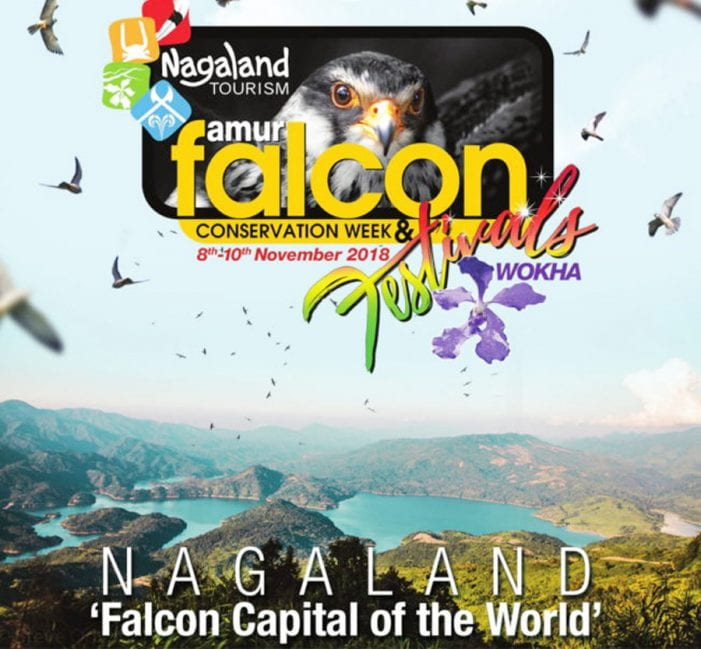 The First Ever Amur Falcon Festival is to be Held in Nagaland